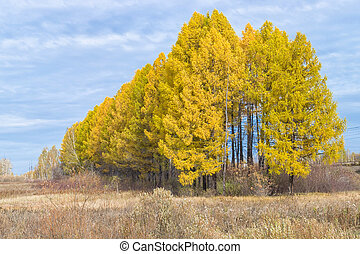 Row of yellow trees with cloudy sky