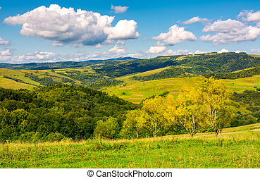 row trees a hillside in autumn