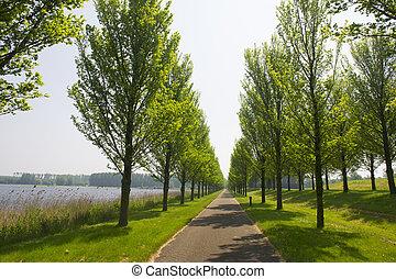 Row trees and bike path in Dutch polder