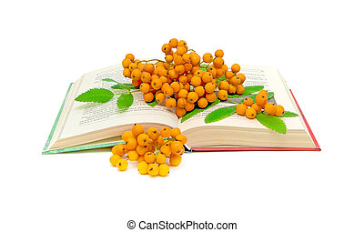 rowan berries on open book - rowan berries on the open book ...
