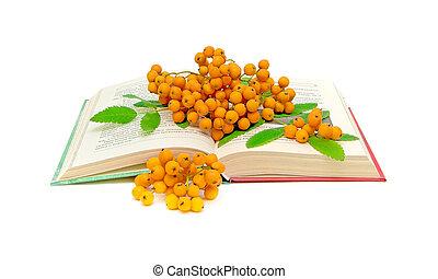 rowan berries on open book - rowan berries on the open book ...
