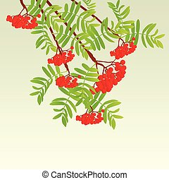 Rowan berries tree branch with leaves autumn vector background vintage