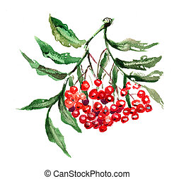 Rowan berries with leaves, watercolor painting