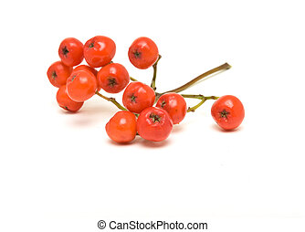 Rowan berry - Rowan berries also known as Mountain Ash or ...