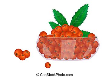 Rowan in glass bowl isolated on white background. - ...
