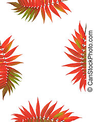 Rowan Leaf Beauty