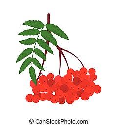 rowan, rama, rojo, icono