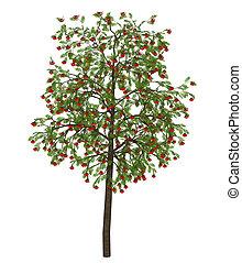 rowan tree - 3d illustration isolated on the white ...