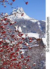Picture of a rowan tree in winter landscape.