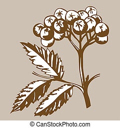 rowanberry on brown background, vector illustration