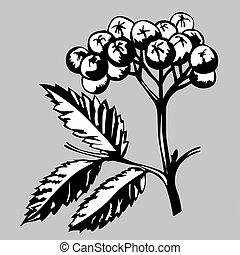 rowanberry on gray background, vector illustration