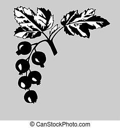 rowanberry on gray background,, vector illustration