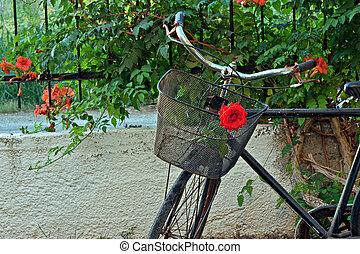rower, róża, zardzewiały, kosz, stary, czerwony