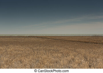 Rowing boats in the reeds. Wooden boat on the grassy shore of the Aral sea on a summer day