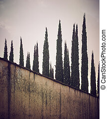Rows of cypress trees in Tuscany