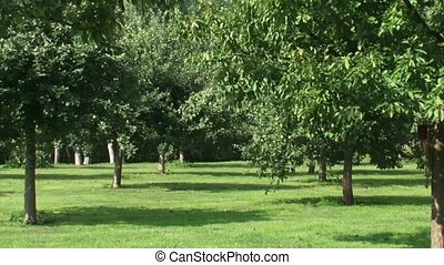 Rows of fruit trees in traditional mixed orchard