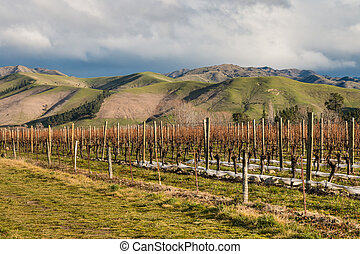 vineyard in New Zealand in winter