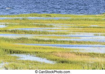 Rows of marsh grass
