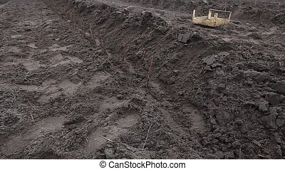 Rows of raspberry saplings planted on agriculture farm -...