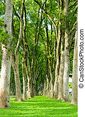 rows of trees and path in green grass