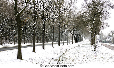 Rows of Trees in Snow