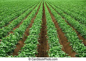 Field with rows of vibrant green crop plants on dark fertile soil
