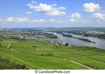 Rows of Vines River Rhine Valley - Rows of Vines on the...