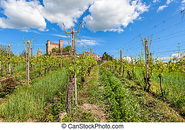 Rows of vineyards in Piedmont, Italy.