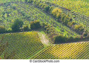rows of vineyards in Tuscany