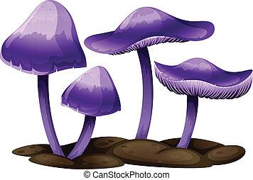 roxo, cogumelos