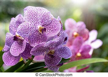 roxo, orquídea, flor