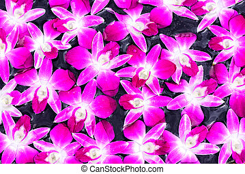 roxo, orquídea, pond., textura, violeta