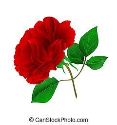 roxo, rosa, folhas, vector.eps, vindima, caule