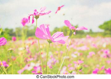roxo, style., flores, pastel, retro, céu, fundo, nuvens, macio, foco., cosmos, cor-de-rosa, vindima, jardim, vermelho