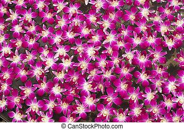 roxo, textura, fundo, water., flutuante, orquídea