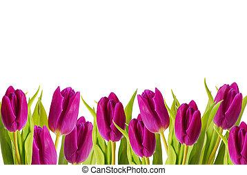 roxo, tulips, quadro