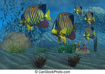 ROYAL ANGELFISH - Beautiful Royal Angelfish shimmer with...
