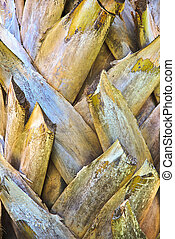 Royal Coconut Palm Bark Texture