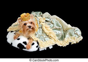 Royal dog wearing crown and luxurious dress