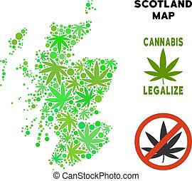 Royalty Free Cannabis Leaves Composition Scotland Map -...
