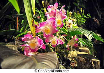 roze, achterplaats, orchids, tuin, bloeien