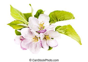 roze, appel, bloesems