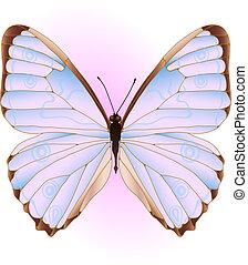 roze, blauwe , vlinder
