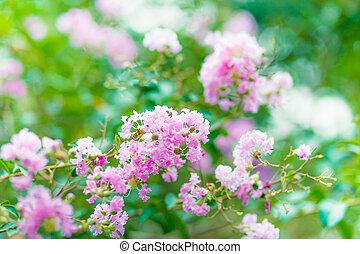 roze bloem, boompje