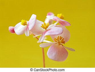 roze bloem, gele