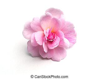 roze bloem, roos, damast