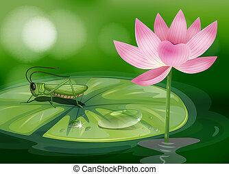 roze bloem, waterlily, sprinkhaan, naast, boven