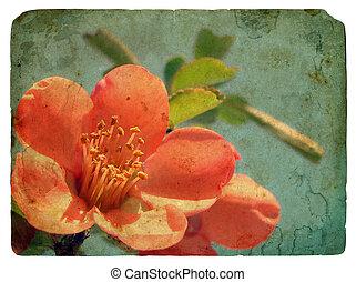 roze, flower., oud, postkaart
