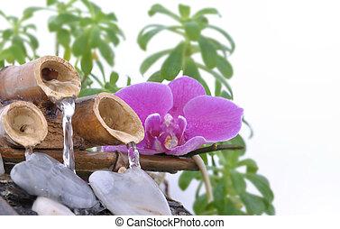 roze, fontijn, orchidee