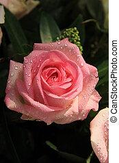 roze, groot, roos